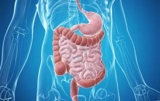 medmove-darm-immunsystem