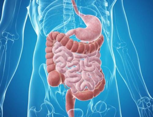 Darmflora: Gesundheit beginnt im Darm